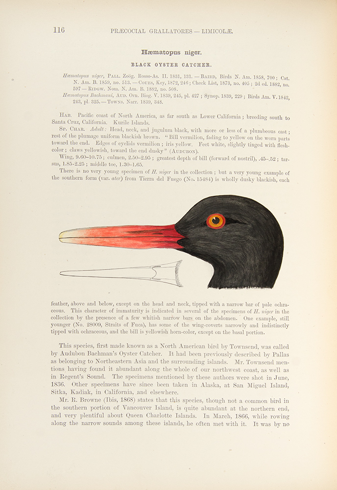 A History of North American Birds ... Land Birds ... [With:] Memoirs of the Museum of Comparative Zoology at Harvard College. Vol. XII. The Water Birds of North America. Spencer Fullerton BAIRD, Thomas Mayo BREWER, Robert RIDGWAY.
