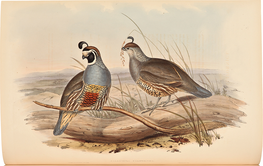 A Monograph of the Odontophorinae, or Partridges of America. John GOULD.