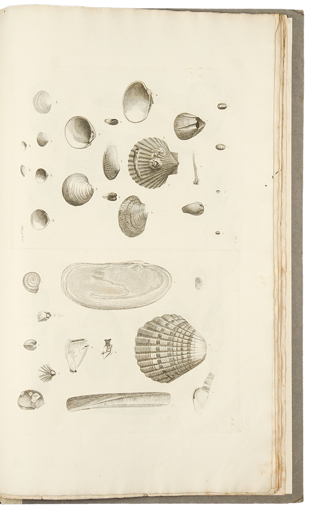 Catalogues of the birds, shells, and some of the more rare plants, of Dorsetshire. From the new and enlarged edition of Mr. Hutchins's history of that county ... With additions; and a brief memoir of the author. Richard PULTENEY, Thomas RACKETT.