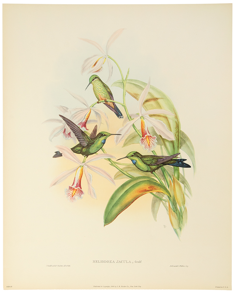 Six Full Color Prints Humming Birds. A Portfolio of Six Magnificent Color Prints. John GOULD.