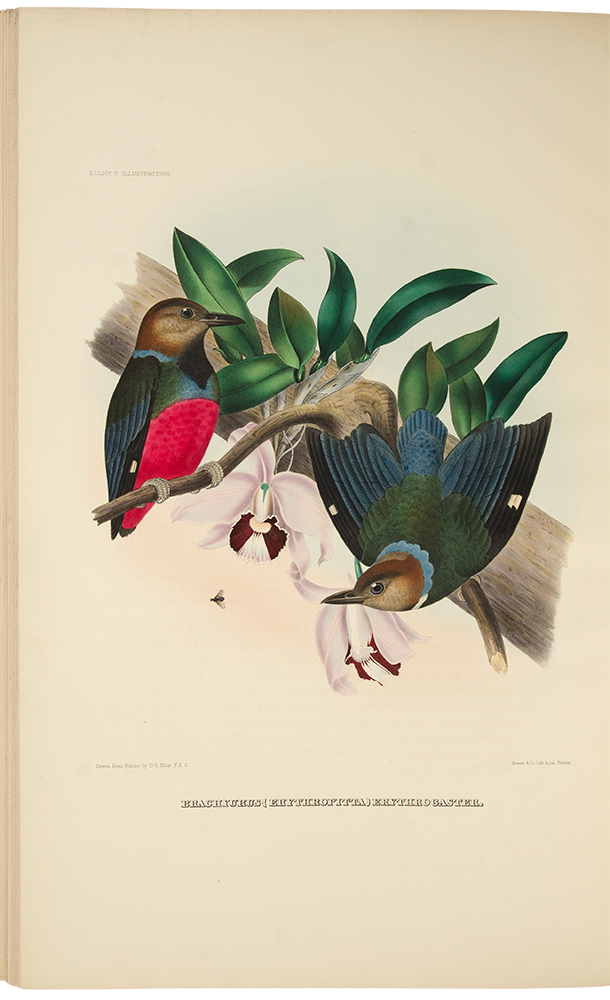 A Monograph of the Pittidae, or, Family of Ant Thrushes. Daniel Giraud ELLIOT.