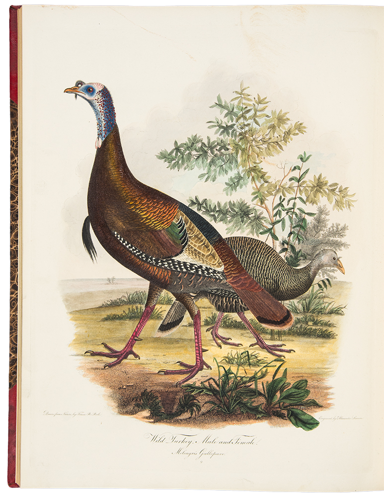 American Ornithology; or, the Natural History of Birds inhabiting the United States, not given by Wilson. Charles Lucian BONAPARTE.