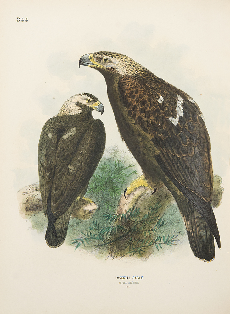 A History of the Birds of Europe, including all the species inhabiting the Western Palaearctic Region. Henry Eeles DRESSER.