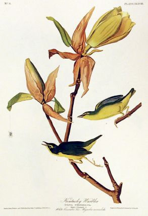 "Kentucky Warbler. From ""The Birds of America"" (Amsterdam Edition). John James AUDUBON"