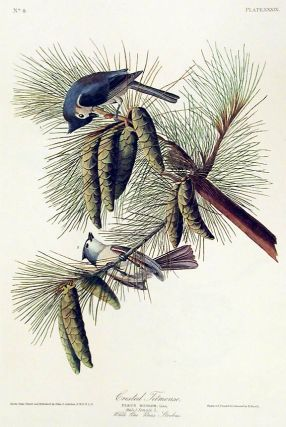 "Crested Titmouse. From ""The Birds of America"" (Amsterdam Edition). John James AUDUBON"