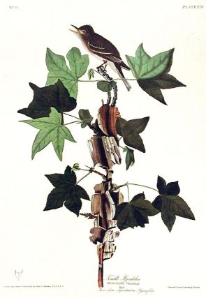 "Traill's Flycatcher. From ""The Birds of America"" (Amsterdam Edition). John James AUDUBON"