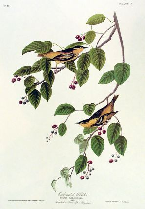 "Carbonated Warbler. From ""The Birds of America"" (Amsterdam Edition). John James AUDUBON."