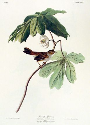 "Swamp Sparrow. From ""The Birds of America"" (Amsterdam Edition). John James AUDUBON"