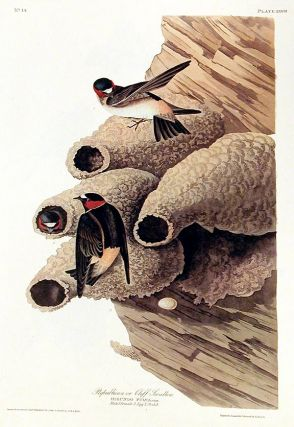 "Republican or Cliff Swallow. From ""The Birds of America"" (Amsterdam Edition). John James AUDUBON"
