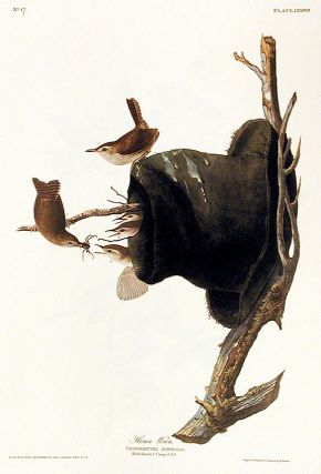"House Wren. From ""The Birds of America"" (Amsterdam Edition). John James AUDUBON"