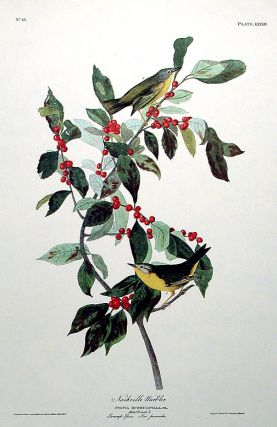 "Nashville Warbler. From ""The Birds of America"" (Amsterdam Edition). John James AUDUBON."