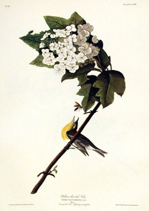"Yellow-throated Vireo. From ""The Birds of America"" (Amsterdam Edition). John James AUDUBON"