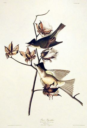"Pewit Flycatcher. From ""The Birds of America"" (Amsterdam Edition). John James AUDUBON"