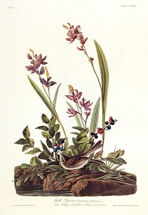 "Field Sparrow. From ""The Birds of America"" (Amsterdam Edition). John James AUDUBON"