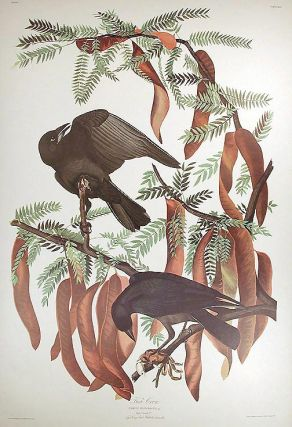 "Fish Crow. From ""The Birds of America"" (Amsterdam Edition). John James AUDUBON"