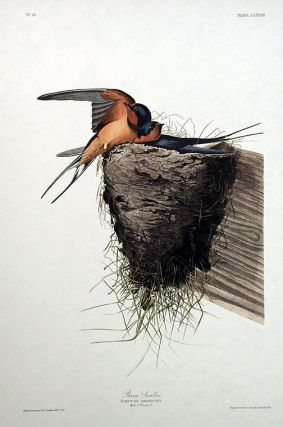 "Barn Swallow. From ""The Birds of America"" (Amsterdam Edition). John James AUDUBON."