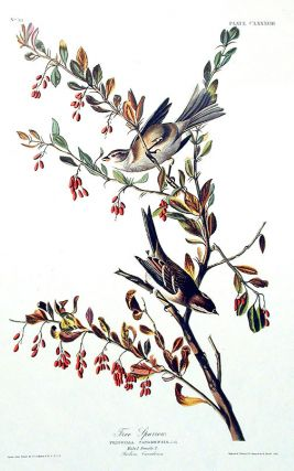 "Tree Sparrow. From ""The Birds of America"" (Amsterdam Edition). John James AUDUBON"