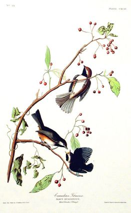 "Canadian Titmouse. From ""The Birds of America"" (Amsterdam Edition). John James AUDUBON."