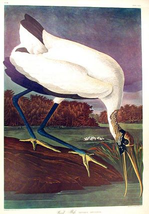 "Wood Ibis. From ""The Birds of America"" (Amsterdam Edition). John James AUDUBON"