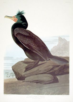 "Double-crested Cormorant. From ""The Birds of America"" (Amsterdam Edition). John James AUDUBON"