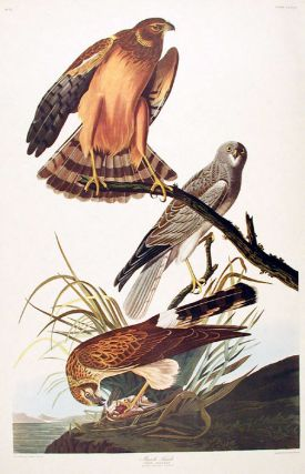 "Marsh Hawk. From ""The Birds of America"" (Amsterdam Edition). John James AUDUBON"