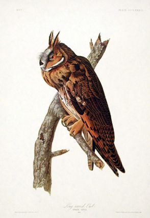 "Long-eared Owl. From ""The Birds of America"" (Amsterdam Edition). John James AUDUBON"