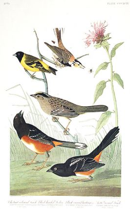 "Chestnut-colored Finch, Black-headed Siskin, Black crown Bunting, Arctic Ground-Finch. From ""The..."