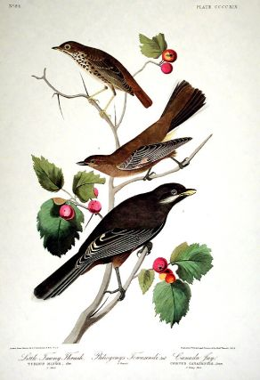 "Little Tawny Thrush, Canada Jay. From ""The Birds of America"" (Amsterdam Edition). John James AUDUBON"