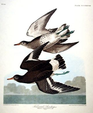 "Townsends Sandpiper. From ""The Birds of America"" (Amsterdam Edition). John James AUDUBON."