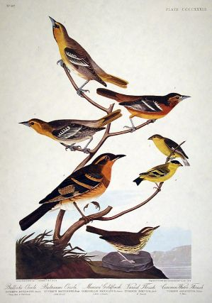Bullock's Oriole, Baltimore Oriole, Mexican Goldfinch, Varied Thrush, Common Water Thrush. From...
