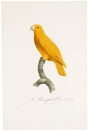 Golden parakeet or conure] Le Perroquet d'Or. Jacques BARRABAND, 1767/