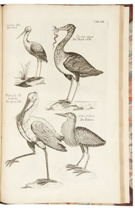 The Ornithology of Francis Willughby ... In three books. Wherein all the birds hitherto known ......