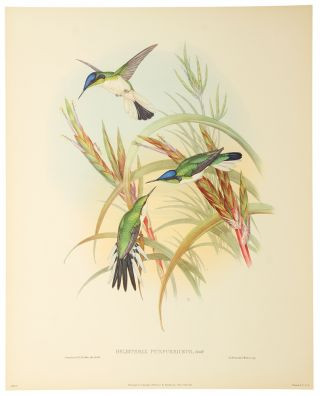 Six Full Color Prints Humming Birds. A Portfolio of Six Magnificent Color Prints...
