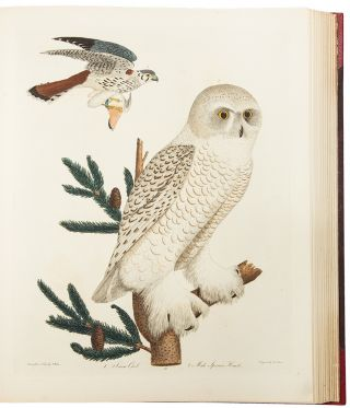 American Ornithology; or the Natural History of the Birds of the United States. Illustrated with plates engraved and coloured from original drawings taken from nature
